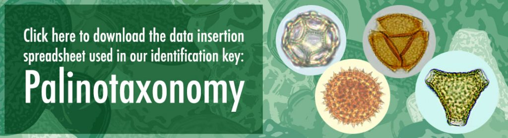 Click here to download the data insertion spreadsheet used in our identification key: Palinotaxonomy